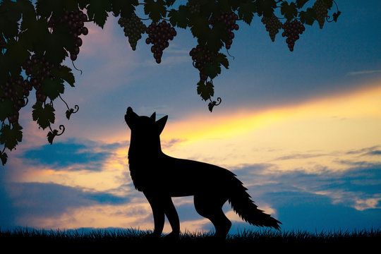 illustration of silhouette of fox and grapes