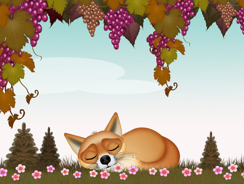 funny illustration of fox sleeping under the grapes