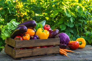 Fresh organic vegetables in wooden box on rustic table in a garden. Agriculture or harvest concept....