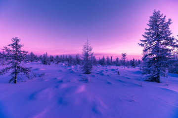 Winter landscape. Forest, cloudy sky, sunset over snow-covered forest.