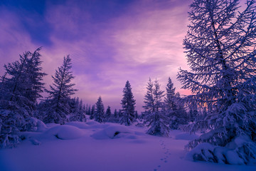 Photo sur Plexiglas Prune Winter landscape. Forest, cloudy sky, sunset over snow-covered forest.