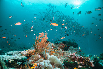Colorful coral reef surrounded by tropical fish, healthy marine ecosystem, Raja Ampat Wall mural