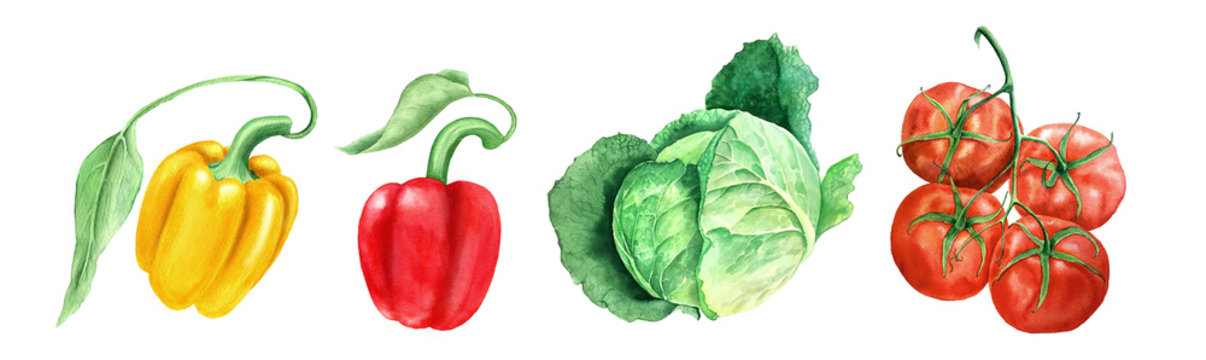 Set of vegetables: tomato, head cabbage and yellow and paprikas watercolor illustration on a white background