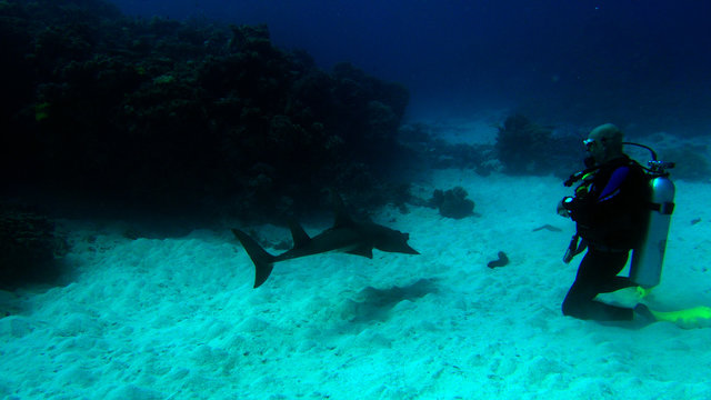 diver kneeling on sand next to guitar shark in great barrier reef coral ecosystem