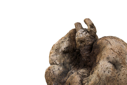 Tree root Shaped like a devil isolated on white background with clipping path. Concept halloween day