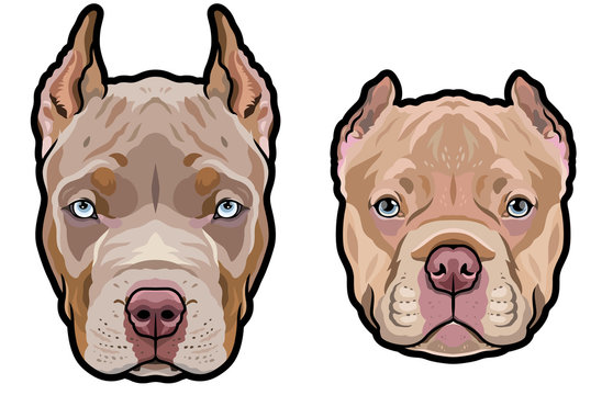 Pitbull dog heads full color vector illustration set
