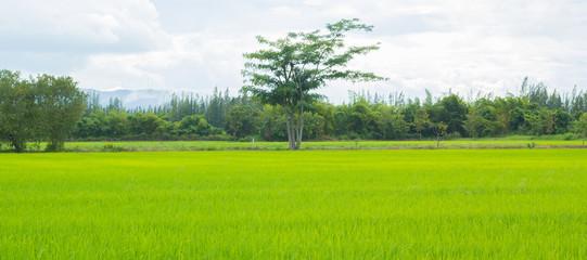 blur green grass and blue sky