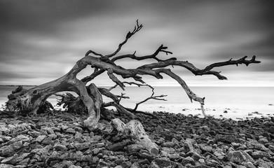 Driftwood on the beach at Jekyll Island, Georgia.