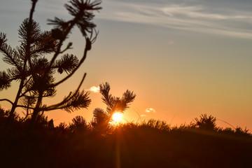 Foto auf Leinwand Braun Zachodzące słońce przysłonięte różna roślinnością.