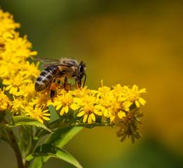 Obraz pszczoła w pracy - fototapety do salonu