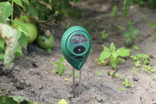 Soil measurements with a digital device. Green plants measure pH and soil moisture. High tech agriculture concept. Blueberries and strawberries. Plant diseases.