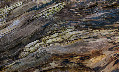 colors of rotting tree bark texture