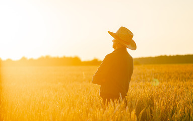 Beautiful photo of dried wheat in sunrays. Blurred background. Gold and yellow colors in landscape.