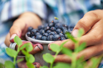 Photo sur Plexiglas Magasin alimentation Kid hand holding bowl of freshly picked wild blueberries against bokeh green forest background.