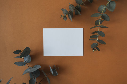 Blank paper sheet card with empty copy space, dry eucalyptus branch on deep red background. Flat lay, top view business mock up template