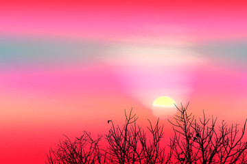 Printed kitchen splashbacks Candy pink colorful sunset back on silhouette dry tree dark red cloud