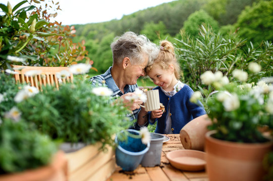 Senior grandmother with small granddaughter gardening on balcony in summer, resting.