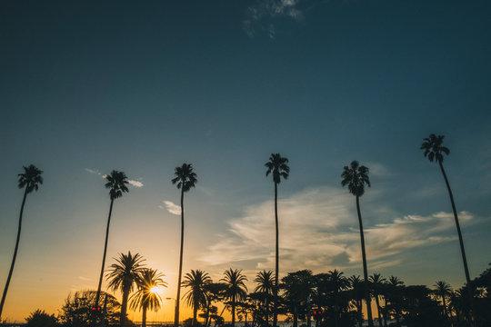 Palm trees at sunset close to St Kilda Pier, Melbourne, Australia