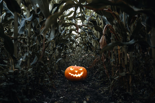 Halloween holiday background. Spooky glowing jack-o-lantern pumpkin on the ground in a cornfield. Twilight time.