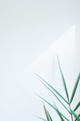 Palm leaves template, tropical summer background with a space for text