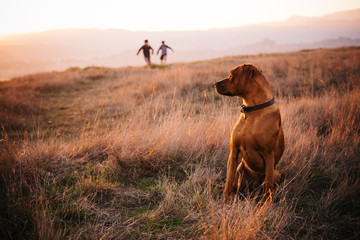 dog waiting for children running in a field