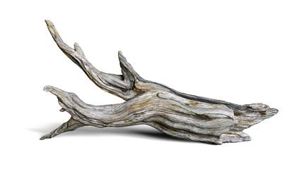 Fototapeta driftwood isolated on white background, aged branch obraz