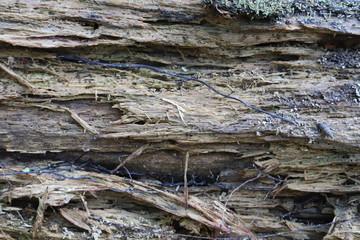 Fototapeta stare spróchniałe drzewo, kłoda nad rzeką obraz