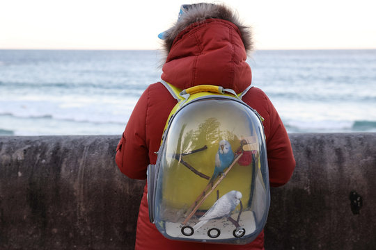 A woman carries pet birds in a backpack while overlooking the ocean at Coogee Beach in Sydney