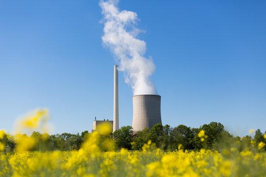 Kohlekraftwerk mit Kühlturm und Raps im Vordergrund