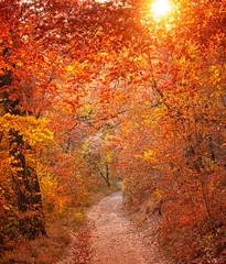 Photo sur Plexiglas Rouge mauve Nice autumnal scene in the forest