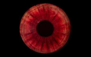 Fond de hotte en verre imprimé Iris red human iris