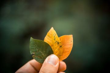 Bunte Blätter in einer Hand halten mit unterschiedlichen Farben. Hintergrund unscharf.