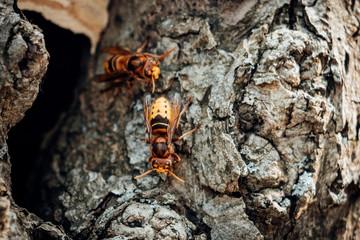 Hornissen an einem Baum