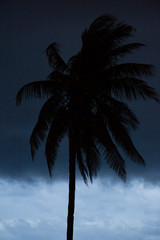 Wall Murals Palm tree palm tree silhouette