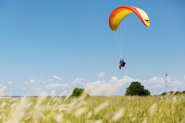 Red yellow paraglider is landing onto the green field in a sunny day