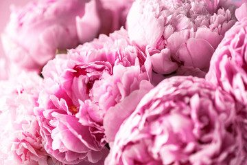 Wedding, birthday, anniversary bouquet. Pink peony flower on pastel background. Copy space. Trendy pastel floral composition. Woman day, Mother's day. Macro of peonies flowers