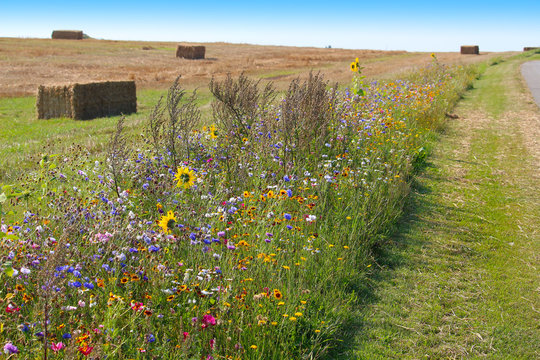 Biodiversity conservation - wildflower borders along farm fields to support pollinators and other wildlife (Jutland, Denmark)