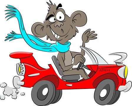 Cartoon monkey driving a red convertible car vector illustration