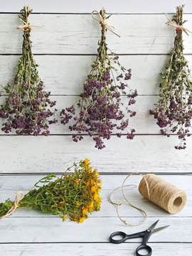 Harvesting herbs of oregano and tutsan into bundles and preparation for drying concept. Methods of preservation for herbs or flowers for future use