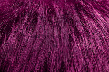 Pink fur as background. Close up