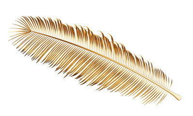 Golden leaves of palm tree isolated on white background, clipping path included