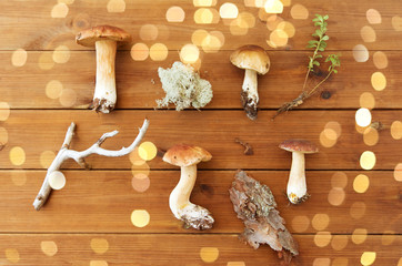 nature and environment concept - boletus edulis mushroom, moss, branch and pine tree bark on wooden...