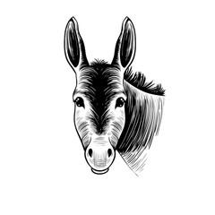 .Donkey head. Hand drawn realistic animal portrait. Vintage vector illustration.