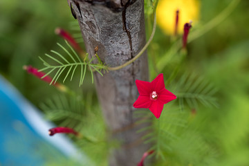 The red star-like flowers have a bright green background.