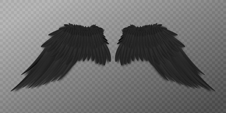 Black bird or dark agel wings with realistic feathers from back view