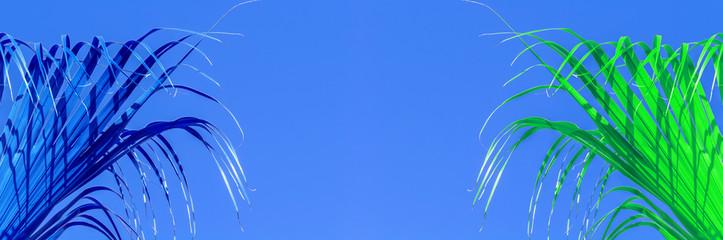Photo sur Plexiglas Palmier Palmes de latanier sur fond de ciel bleu
