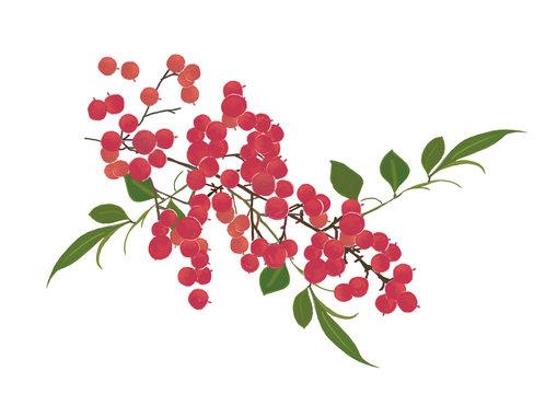 水彩画日本の正月やお祝い年賀はがきの素材赤い実の南天