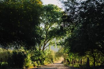 Fototapeta paisajes de la sierra sonorense