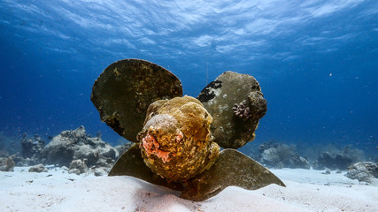 Ship wreck in turquoise water of coral reef in Caribbean sea / Curacao