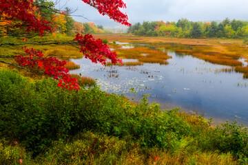 Autumn along Duck Brook Road, Acadia National Park, Maine